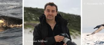 """Uniek in Nederland: Lezing """"de Witte Haai in Australië"""" door Allesandro De Maddalena"""